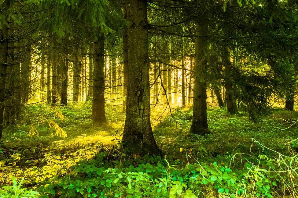 Random Forest Tutorial for Beginners
